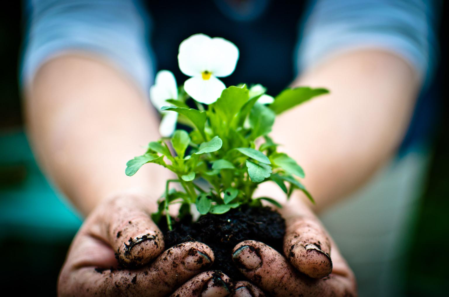 Intro to Organic Gardening - Hampden