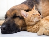 Med-Large Cat & Dog FIRST AID/CPR