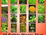 Edible and Medicinal Plant Walk