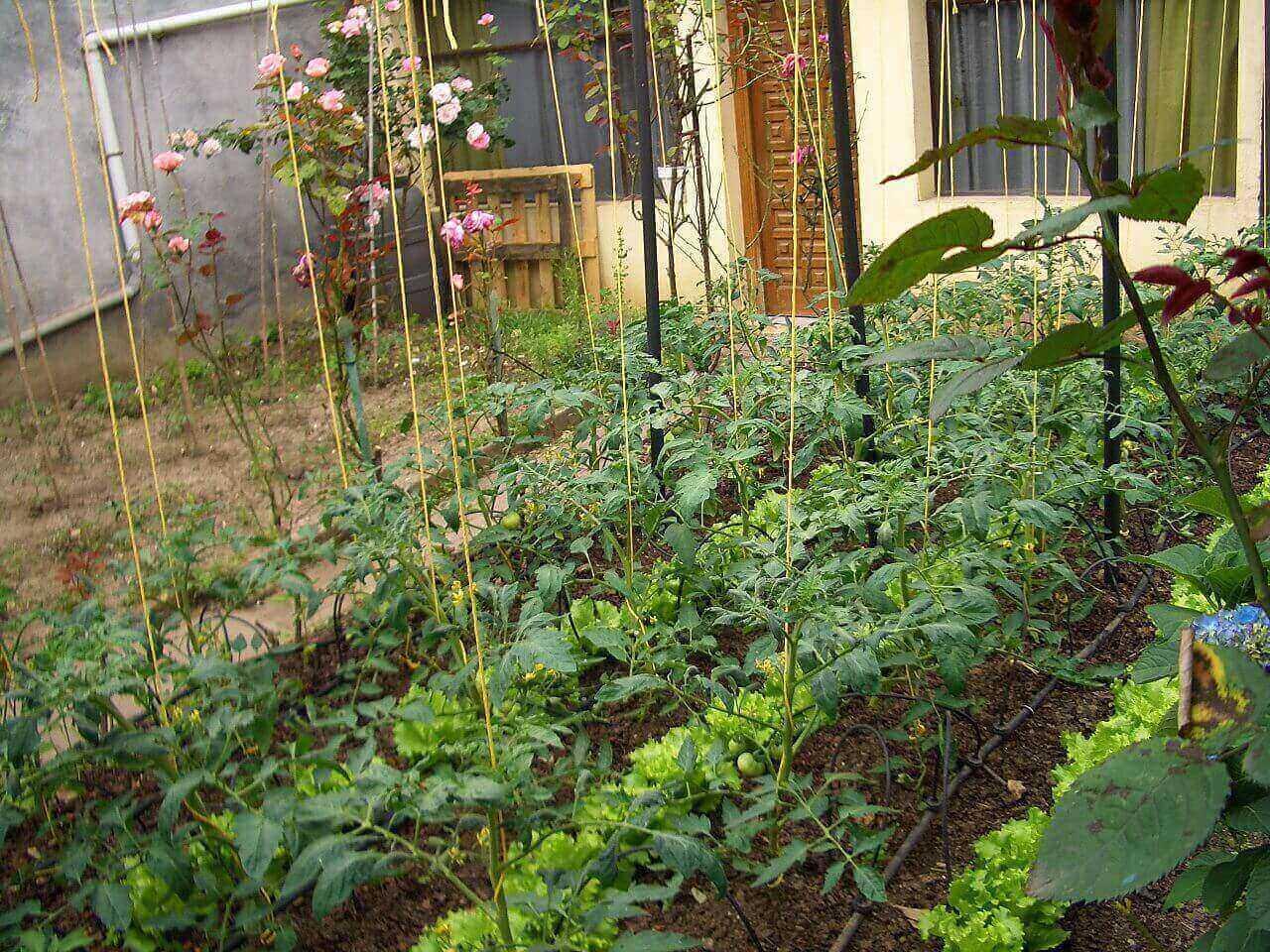 Grow Your Own Organic Garden - MOFGA
