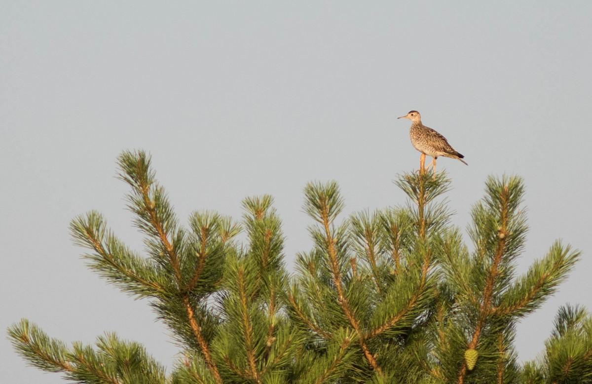 Grassland Birds of Kennebunk Plains