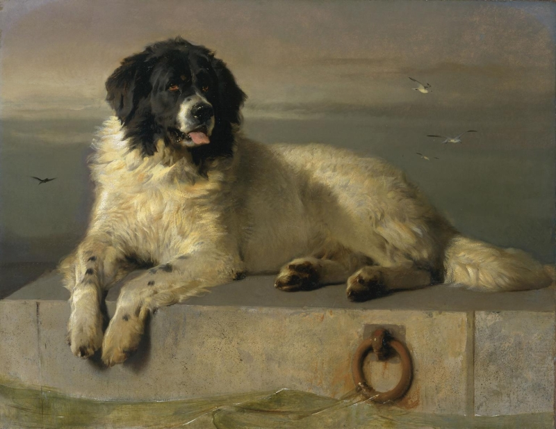 Original source: https://upload.wikimedia.org/wikipedia/commons/c/c9/A_Distinguished_Member_of_the_Humane_Society_by_Sir_Edwin_Landseer.jpg