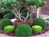 405F19 Landscaping For Fall And Winter Color