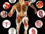 Original source: http://www.innersourcehealing.com/wp-content/uploads/2015/11/Anatomy-and-Physiology-2015.png