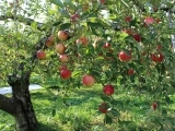 A Seminar on Fruit Trees - R1 HVRHS