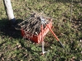 DIY Tree Care