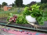 Get Your Vegetable Garden Ready for Spring