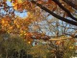 Shrub & Tree Care - Pruning and Winterization - Nov.