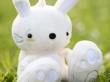 Bunny Night