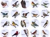 Original source: http://4.bp.blogspot.com/-nuKMDqT9CcM/VbONDaOQyaI/AAAAAAAACQo/gmu5RrMr4KY/s1600/Forest-Birds.jpg