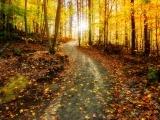 A Path of Gratitude