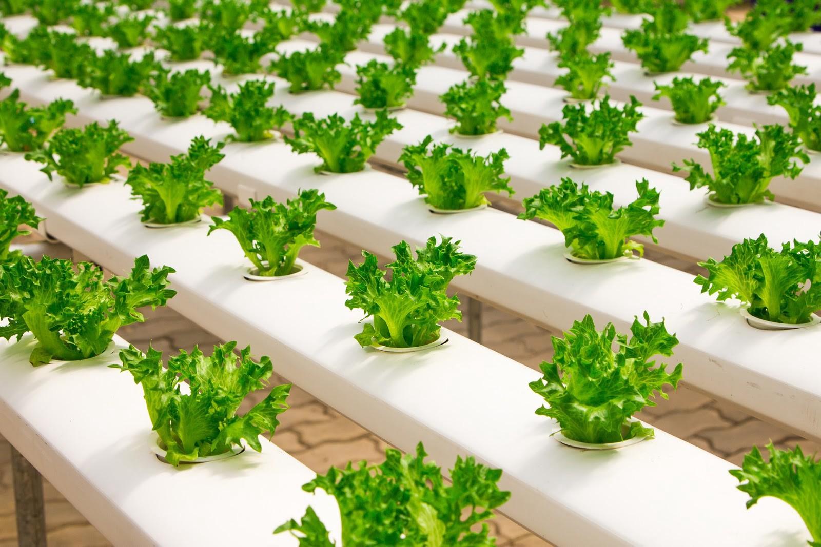 GAR 05 - Workshops: Food Farming with Hydroponics