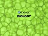 21. BIOLOGY (Option 9)