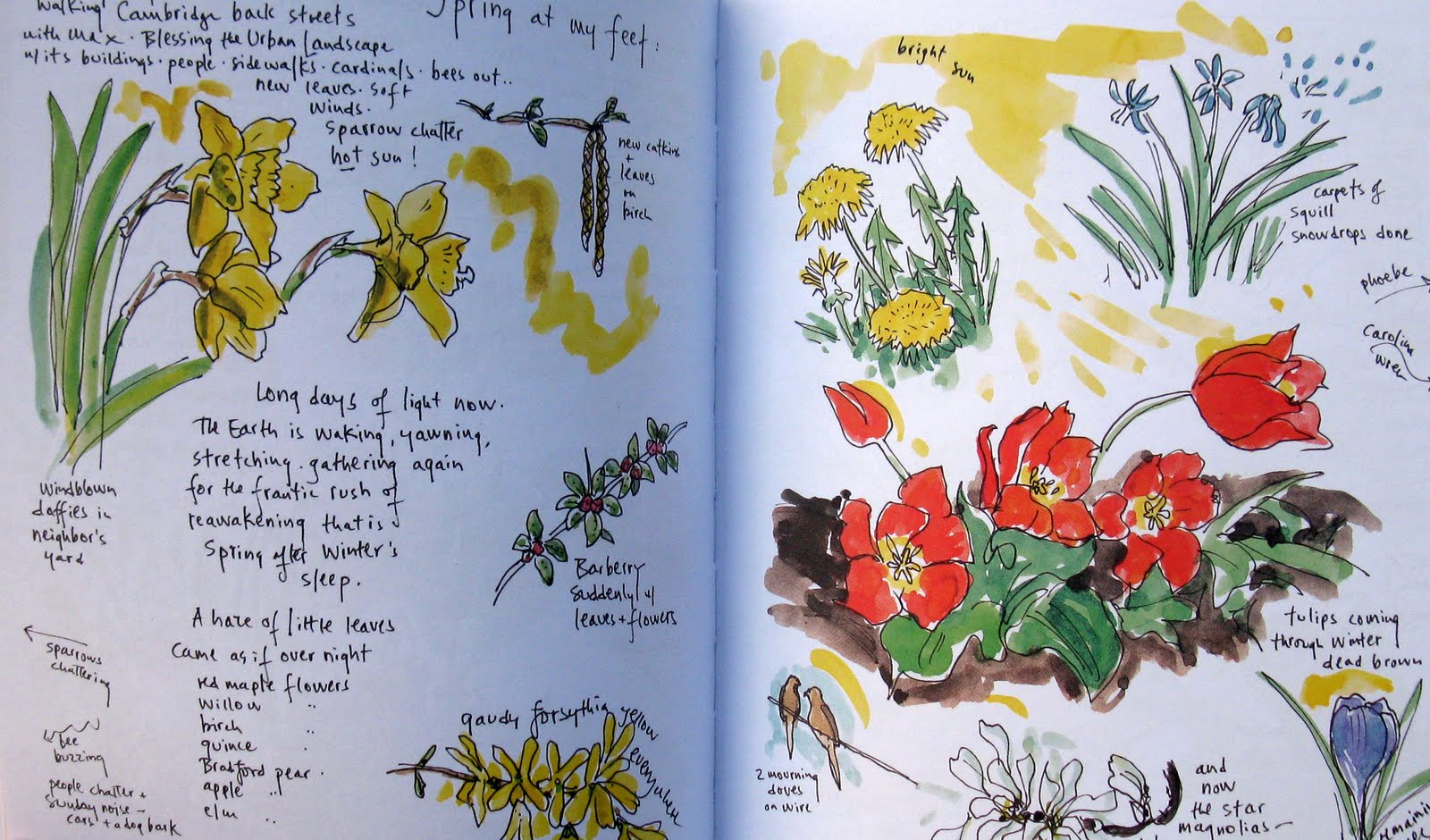 Nature Journaling Art Messalonskee W19
