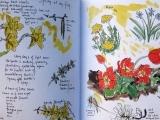 Nature Journaling Art Messalonskee W19