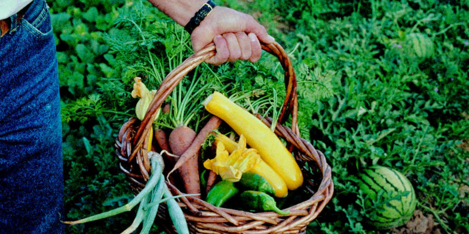 Grow Your Own Organic Garden (Damariscotta)