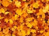 Autumn Watercolors (Online)