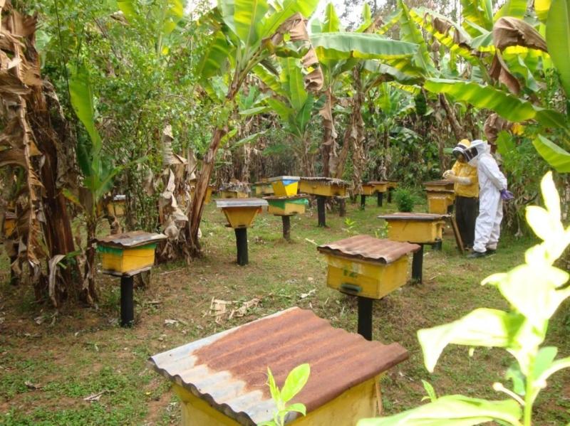Original source: http://www.beekeeping-tools.com/images/beekeeping-news/beekeeping-tools-in-ethiopia.jpg