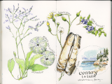 The Naturalist's Sketchbook: Sketching Nature in Pencil, Pen, and Paint