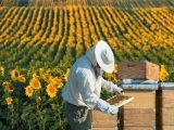 Intermediate Beekeeping - New!