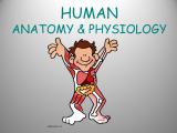 SMCC: Anatomy & Physiology II with Lab