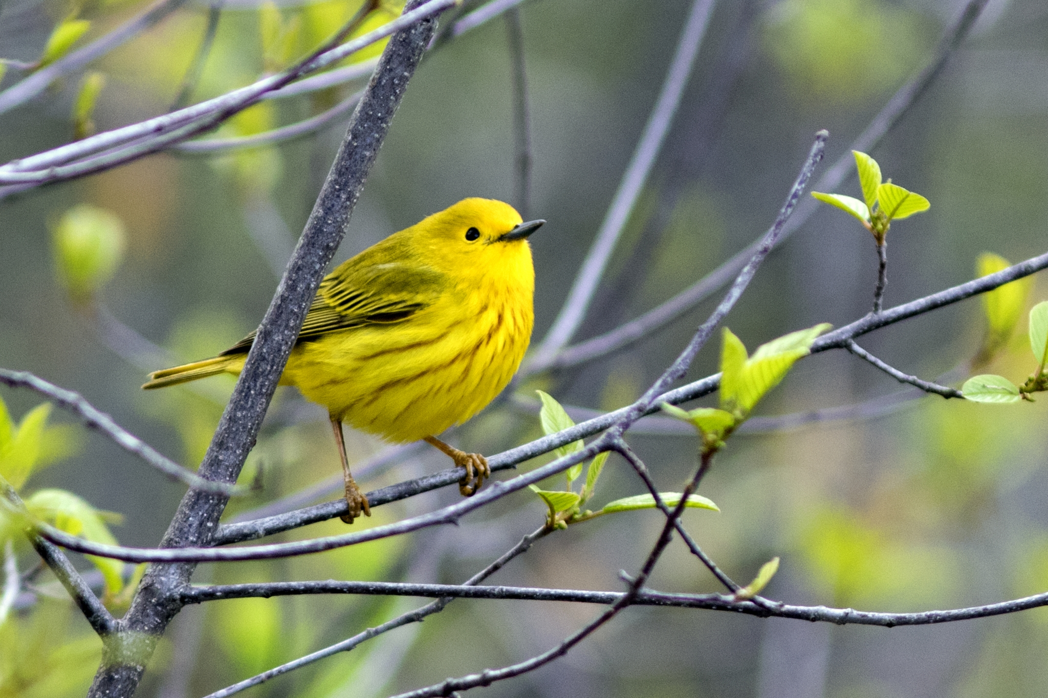 Spring Nature Journaling ~ Birds!