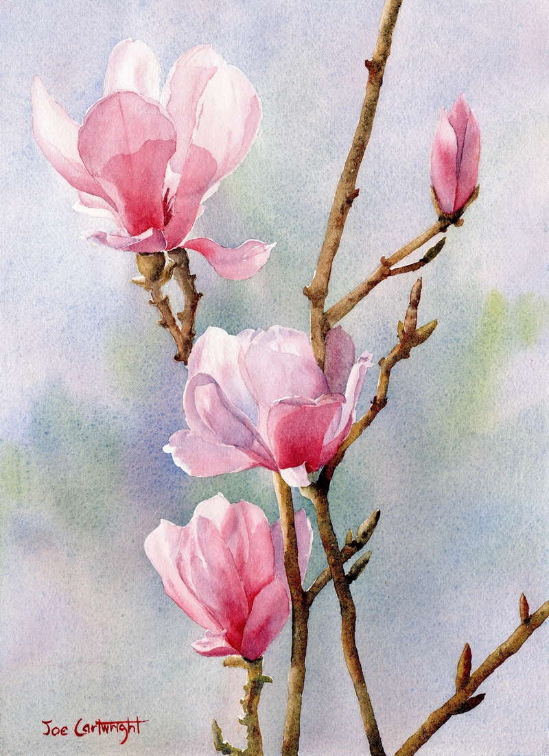 Original source: http://www.paintingwithwatercolors.com/wp-content/uploads/2010/12/Pink-Magnolias-watercolour-painting-by-Joe-Cartwright1.jpg