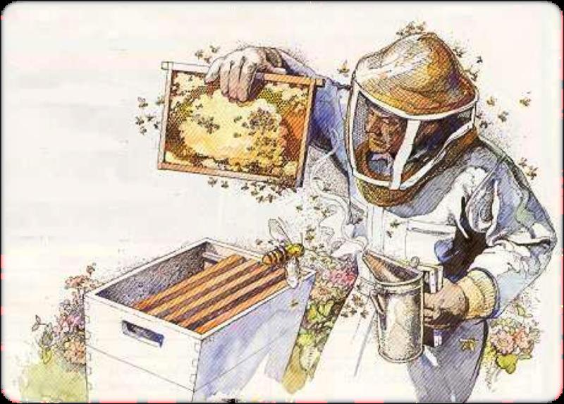 Original source: http://www.largeassociates.com/cz1000/2015BeekeepingCourse/beekeeper.png