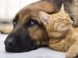 Pet Talk
