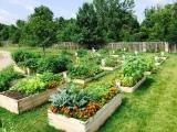 Button Up Your Garden