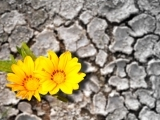 Gardening - Plants and Climate Change