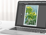 Adobe Illustrator - Private Instruction