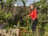 Gardening: Planting, Harvesting, and Using Garlic