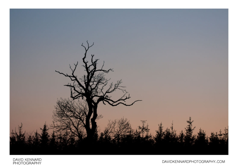 Original source: http://static2.davidkennardphotography.com/Img/3487-Winter-tree-silhouette-at-twilight.jpg