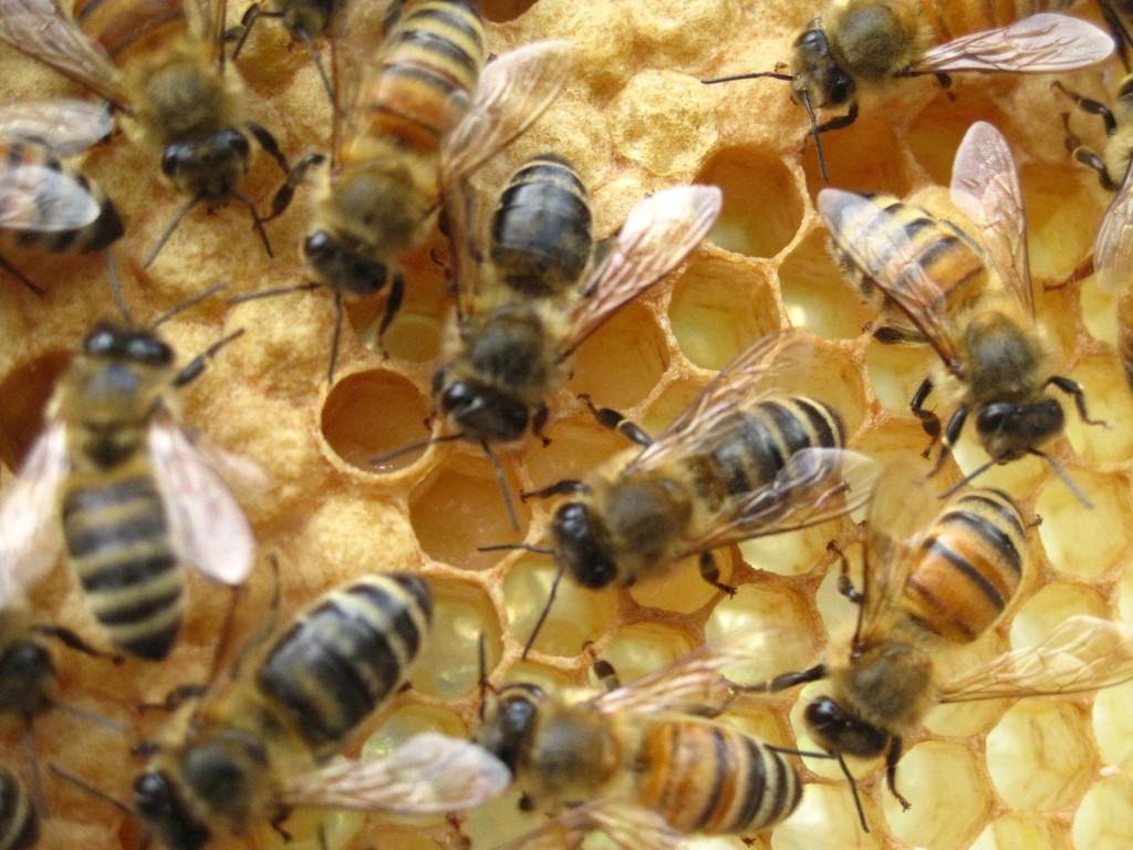 Beekeeping, Intermediate