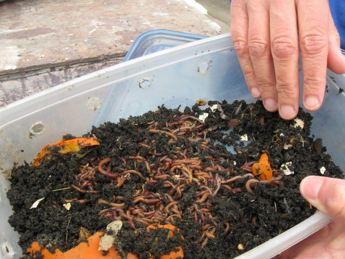 Worm Composting Free Alumni Harvest Night May W19
