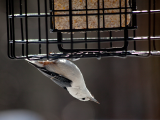 Member Double Discount Day & Bird Seed Sale