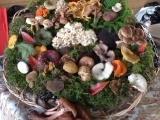 Edible Mushroom Collecting Walk