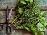 Original source: http://cdn.modernfarmer.com/wp-content/uploads/2015/08/how-to-harvest-dry-herbs.jpg