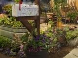 Boston Flower Show Trip