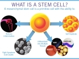 HOPE for tomorrow—the precious promise of stem cells