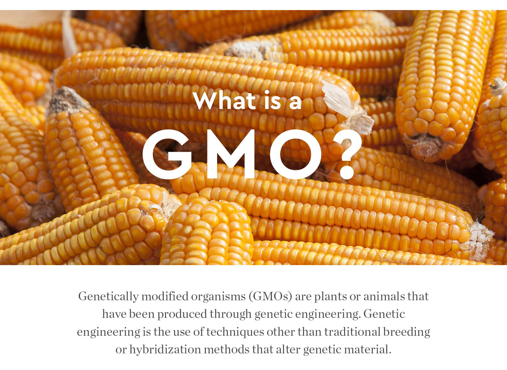 GMO Round Table Dicussion
