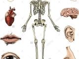 Human Biology with Lab - Hybrid - Smr18