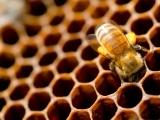 Beekeeping for Beginners - Spring