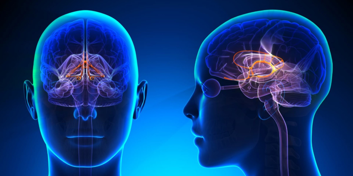 Your Brain Efficiency and Your Personal Health