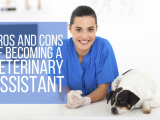 Become a Veterinary Assistant (Self-Paced Tutorial)
