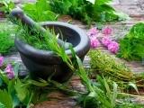 Plant Medicine Under your Feet