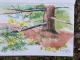 Painting Watercolors Outdoors