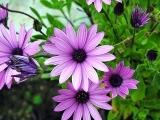 FLOWER MONOPRINTS