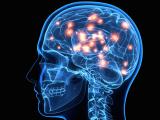 Original source: http://maleresearch.com/wp-content/uploads/2015/02/brain_health2.png